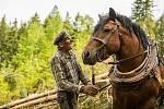 Napadené dřevo vozí  ze sjezdovky koně