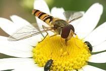 V chrudimském Městském parku objevíte při troše trpělivosti a pozornosti tajemný svět hmyzu.