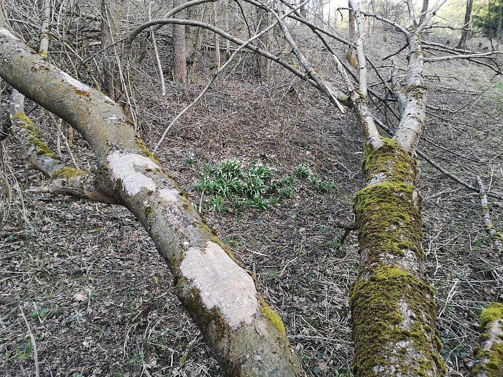 Bledule, 150 metrů jižně od trojmezí.
