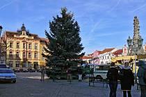 Chrudimský vánoční strom přivezli ze Slatiňan.