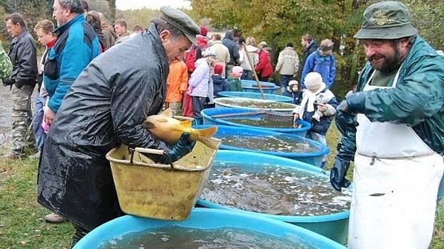 Tradiční podzimní výlov rybníka v Loučkách u Podlíšťan.