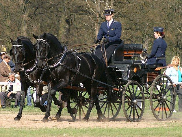 Koně a koňské závody