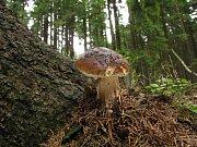 Ani říjen nebyl k houbařům skoupý.