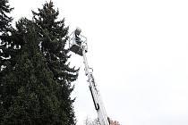 Ozdobený strom u Divadla Karla Pippicha.