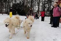 V Heřmanově Městci se sešli musheři se svými čtyřnohými svěřenci na tradičním Dnu severských psů.