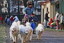Zámeckým parkem v Heřmanově Městci se proháněla spřežení severských psů.