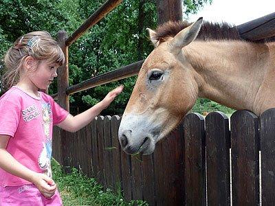 Koně Převalského ve Slatiňanech.