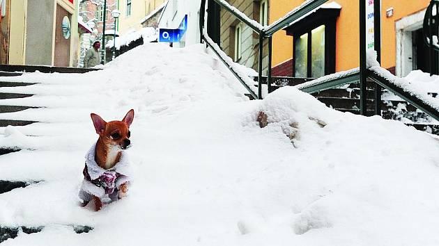 Sníh nedělá potíže jen lidem, ale i zvířatům.