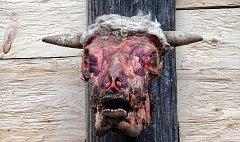Syrová býčí hlava nad skanzenem
