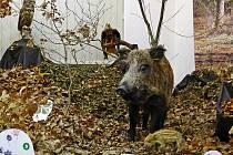 Lesní zvěř jakoby v Regionálním muzeu oživla.