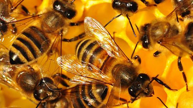 Včelí stezka nabídne zábavu i poučení.