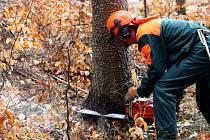 Lesníci v rámci prevence kladli lapáky.