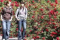 Návštěvníci se letos potěší jen keři kvetoucími u přístupové cesty k zámku.