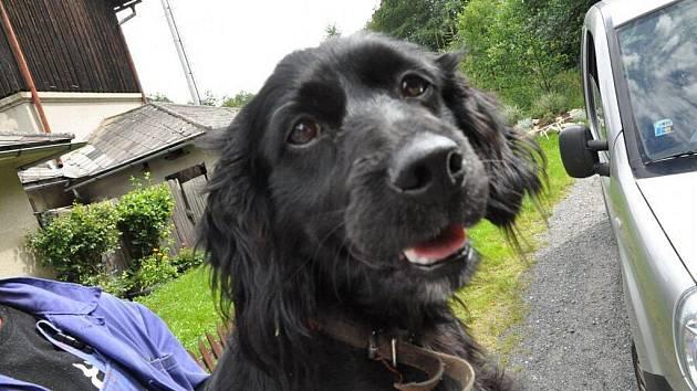 Opuštěný pes ve Františkách našel nového pána.