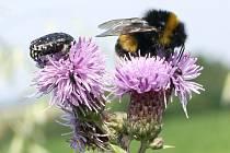 Svět hmyzu je velmi pestrý a krásný. Stačí se jen na jeho zástupce podívat zblízka.