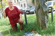 Chrudimačka Věra Pitrová se pochlubila svým prvním letošním houbařským úlovkem.