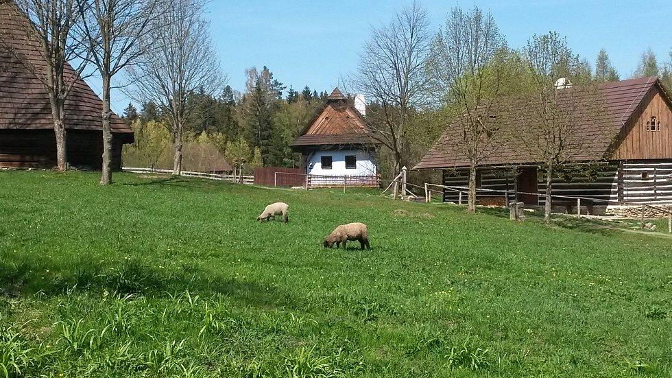 Muzeum vpřírodě Vysočina