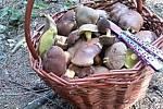 Plný košík hub nasbírala Niky Purtíková za pouhou hodinu a půl. Kde? V lese u Nasavrk.
