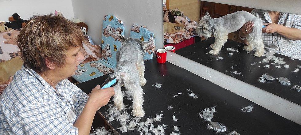 Konečně! Z Maxe je zase fešák: Otevřely se psí salony. Foto: Milan Klicpera