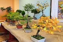 Lidé mohli obdivovat i krásné bonsaje.