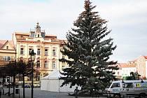 Kdo nabídne Chrudimi vánoční strom?