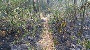 Požár ovocného sadu ve stráni a části lesa.