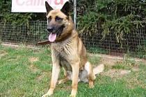 Sorbon, pes z chrudimského útulku.