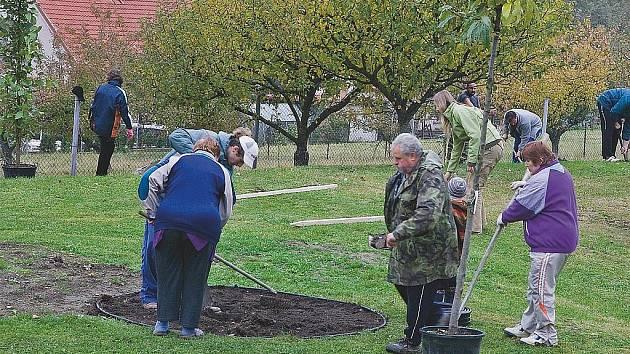 V Jenišovicích zasázeli neobvyklé druhy stromů.