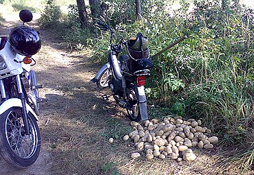 Zloděj už měl v pytli zhruba 40 kg brambor.