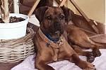 """Z původně """"agresivního"""" Arona s nálepkou neumístitelného psa se stal milovaný člen rodiny"""