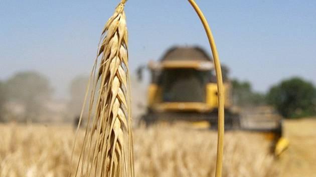 Studený máj pěstitelům obilí na Třebíčsku výrazně pomohl