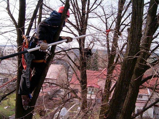 Strom stojící před Hotelovou školou Bohemia v Chrudimi je předmětem názorové pře.
