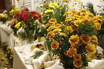 Výstava Hlinecká chryzantéma v hlinecké Orlovně opět zářila barvami.