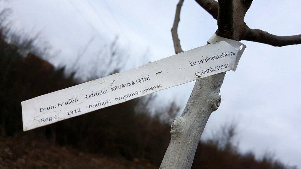 Sad v Třemošnici znovu ožil.