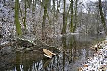 V některých místech zabahněného náhonu leží větve odlámané v průběhu času z okolních stromů.