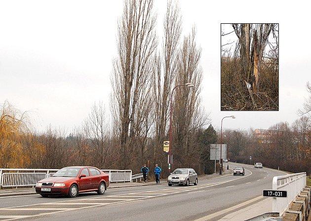 Topoly poblíž zimního stadionu v chrudimské ulici Dr. Milady Horákové mají nejlepší léta za sebou.