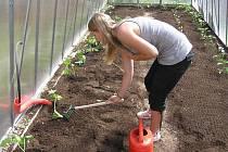 Dětský domov se školou, středisko výchovné péče a základní škola Chrudim pěstují ve skleníku biozeleninu.