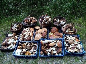 Výsledky houbařských výprav Jiřího Laštůvky