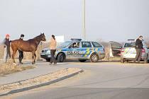 Uprchlého koně pronásledovaly policejní hlídky.