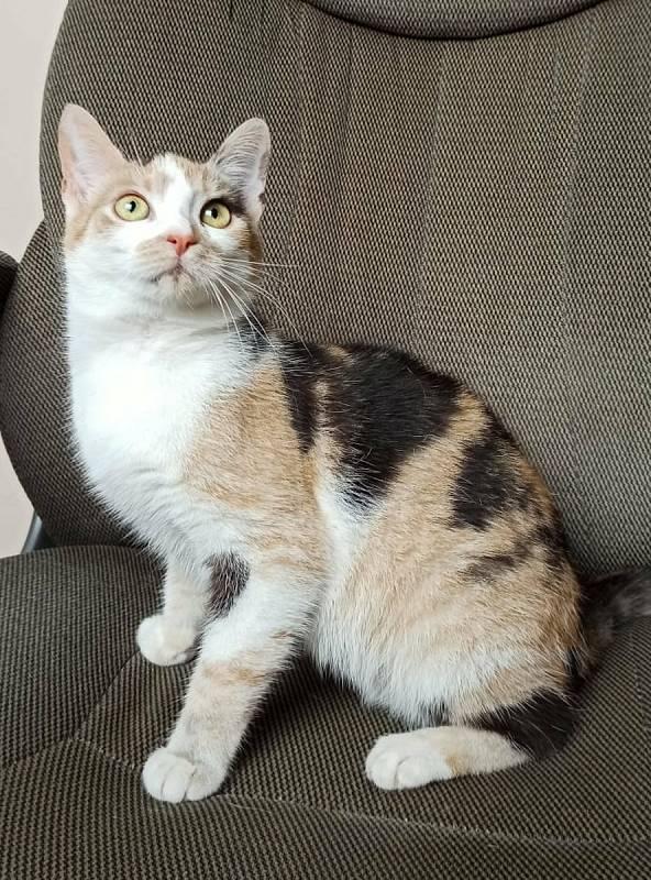 Kočka Pepina