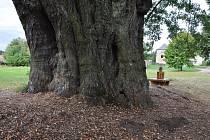 Obec uspořádá v místní části Lipka v neděli Oslavu stromu roku.