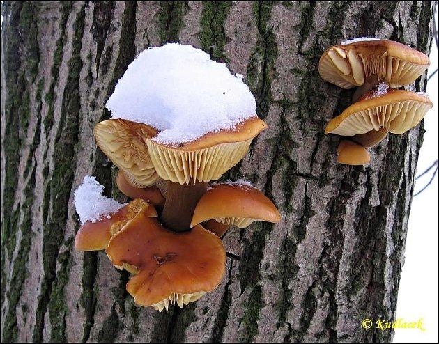 Houby, houbaři