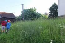Neposečené loučky ve Žďáru nad Sázavou jsou plné květin, vévodí jim kopretiny.