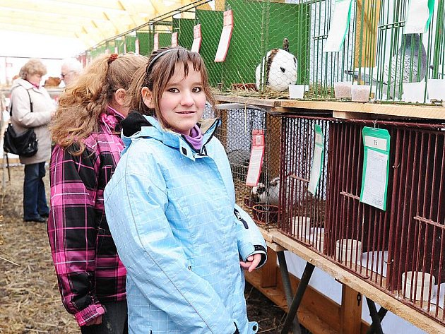 Chovatelská výstava králíků a holubů se konala ve dnech 26. a 27. února 2011 v Rabštejnské Lhotě.