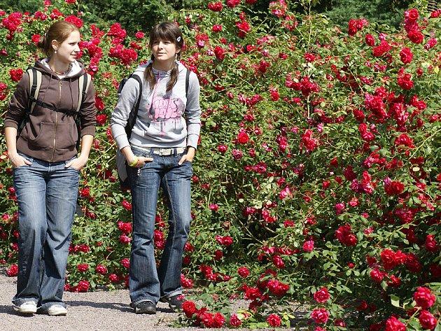 Zámecký park v těchto dnech připomíná pohádku o Šípkové Růžence.