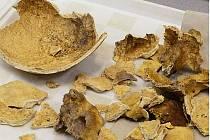 Úlomky lidských lebek nalezených na místě záchranného archeologického výzkumu.