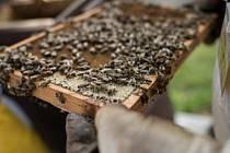 Neštěstí pro včelaře: Na čtyři nová ohniska moru platí jen benzin a oheň