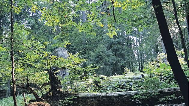 Přírodní rezervace Polom v Železných horách.