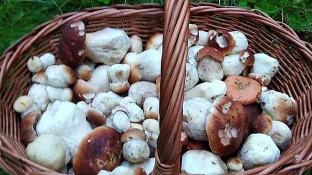 Ve Studnicích se chystá výstava hub