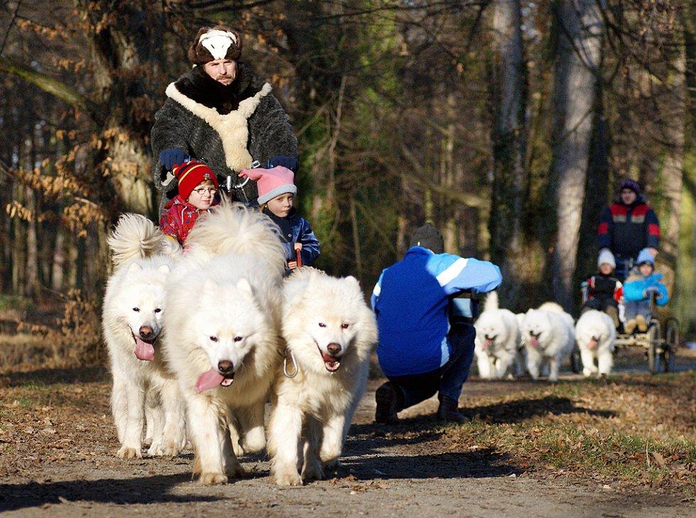 Parkem Bažantnice v Heřmanove Městci se proháněla psí spřežení.